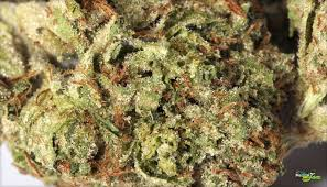 Buy Godfather OG kush online